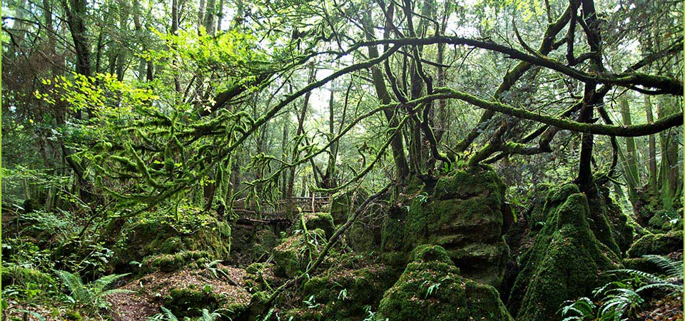 Puzzlewood is now open weekends & Wednesdays only